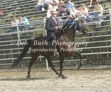 46TH ANNUAL EAST TENN CLASSIC HORSE SHOW  6-20-15  GRAY TN-
