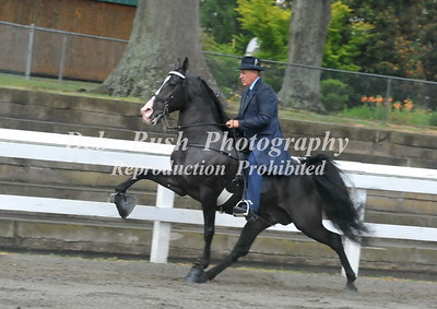 FOOTHILLS JUBILEE WALKING HORSE SHOW DALLAS NC  6-27-2015
