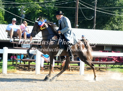 CHESTNUT HILL  ETWHLA  LADIES AUXILIARY HORSE SHOW   AUG  1