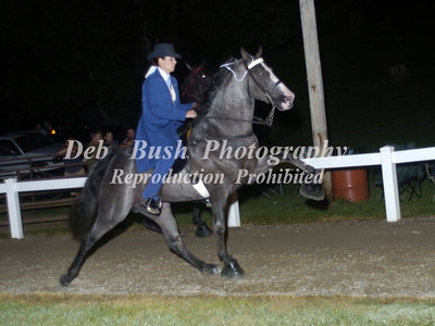 CLASS 32  AMATEUR 15.2  AND UNDER WALKING