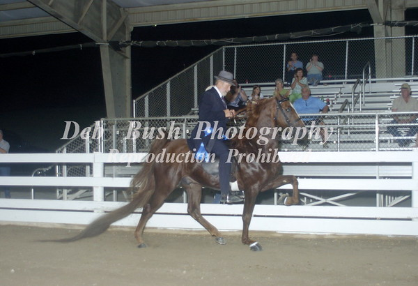 CL 20  SADDLEBRED / NATIONALBRED STYLE
