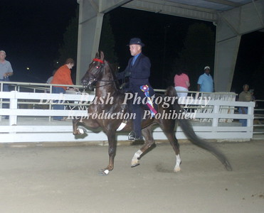 CL 27  SADDLEBRED  CHAMPIONSHIP