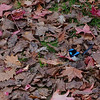 A touch of blue among the autumn colours