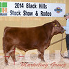 Red Angus Lot 17
