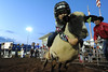 Walt Hester | Trail-Gazette<br /> A mutton buster bounds out of the gate during competition on Tuesday. Children get to participate in the rodeo through the competition.