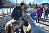 22EPLPht Feeding time.jpg A local man is crowded by critters in the petting zoo of the Whiskey Warmup on Saturday. The zoo was one of several family-oriented events during the weekend.