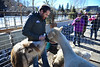 A local man is crowded by critters in the petting zoo of the Whiskey Warmup on Saturday. The zoo was one of several family-oriented events during the weekend.