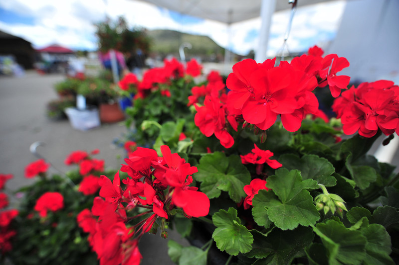One of many flower boothes display bright, colorful blooms on Thursday. Flowers, bread, yogurt and produce fill the tables at the Estes Valley Farmers' Market.