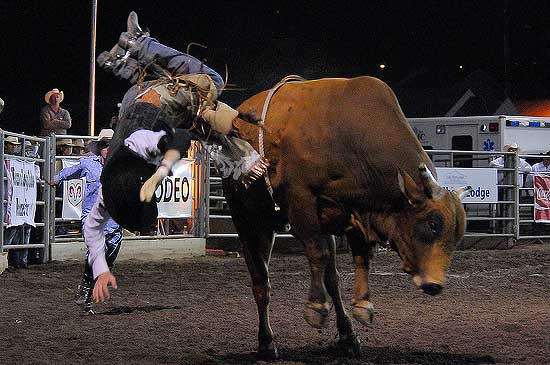 Seth Glause of Rock Springs, Wyo. is launched during Bull Riding on the last night of the Rooftop Rodeo on Sunday. Only one bull rider, Cody Gardner of LaSalle, Colo. stayed on for the full eight seconds all week. Photo by Walt Hester