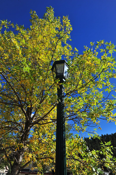 Signs of autumn decorate the Estes Valley Public Library parking lot on Saturday. With or without the festival, autumn gold is appearing.