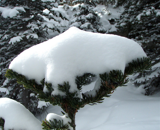 Snow is nature's tree topper in Rocky Mountain National Park.