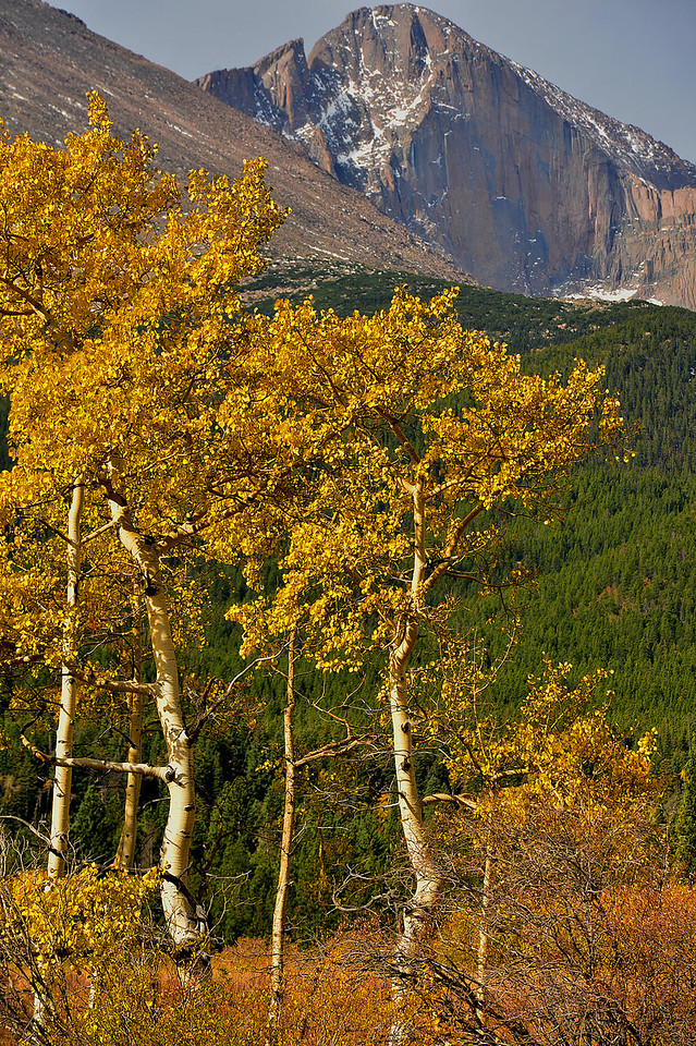 Longs Peak stand like a southern sentinel, guarding the approach into Estes Park. The peak stands 14,258 feet above sea level, more than 7,000 feet higher than Estes Park, and is the most northern of Colorado's 14'ers.