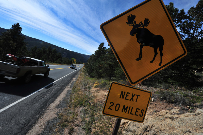 Between Nederland and Estes Park, there is more to see than trees and mountains. The largest member of the deer family has taken up residence on the east side of the Continental Divide and have been seen along the highway.