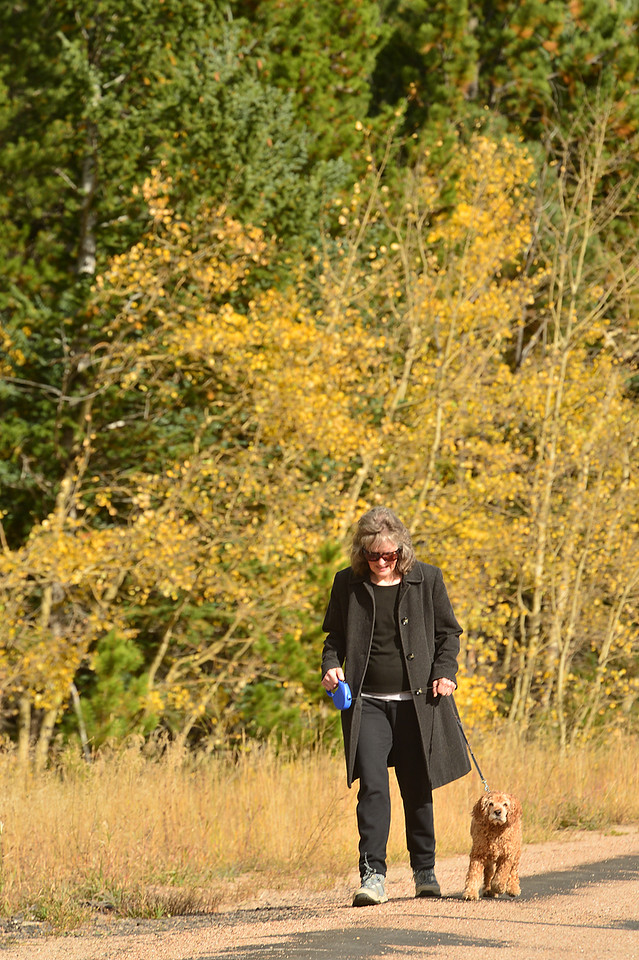 An Allenspark resident walks her dog past the remains of fall foliage on Wednesday. The aspens are peaking at widely varied rates; some just changing, some nearly bare.