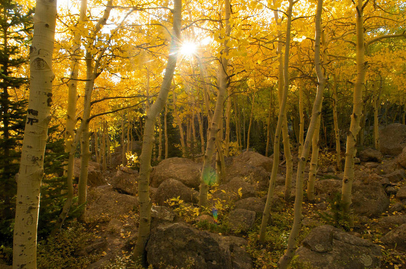 In Autumn, the trail to Alberta Falls turns golden.