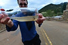 A trout seems disoriented in a bottle at the YMCA of the Rockies on Saturday. Fish were stranded on streets in the area after the flood water receeded.