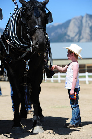 Walt Hester   Trail-Gazette<br /> Loraine Clark, 6, of Colorado Springs, admires a draft horse at the Estes Park Draft Horse Show on Sunday. The event showcased the strength and teamwork of these gental giants.