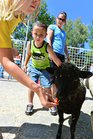 Walt Hester | Trail-Gazette<br /> Children and parents enjoy the sheep, goats, a llama and a donkey at the Estes Park Heritage Festival petting zoo.