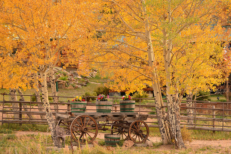 Walt Hester | Trail-Gazette<br /> Potted flowers add to the natural beauty along Mary's Lake Road on Monday. Aspens are close to peak higher in the park, they are changing in town, as well.