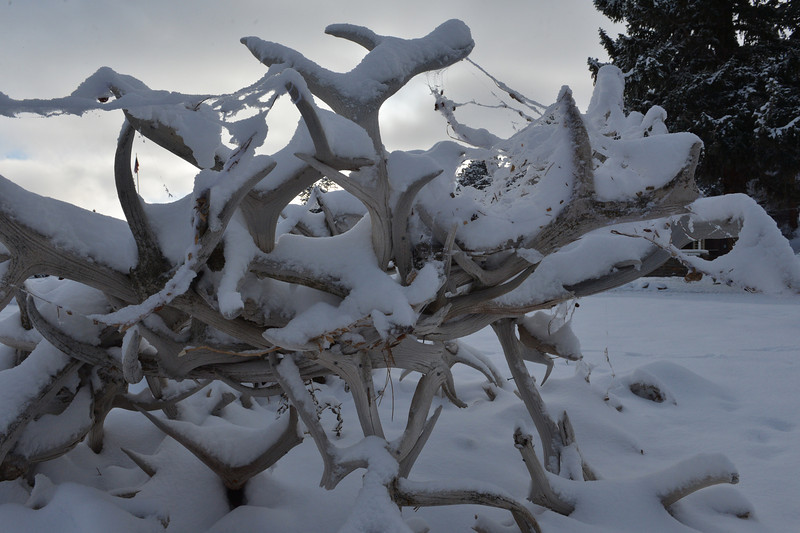 Snow-covered antlers make odd forms in front of the Elkhorn Lodge on Friday. Like pumpkins and cobwebs, snow is just a part of October in Estes Park.