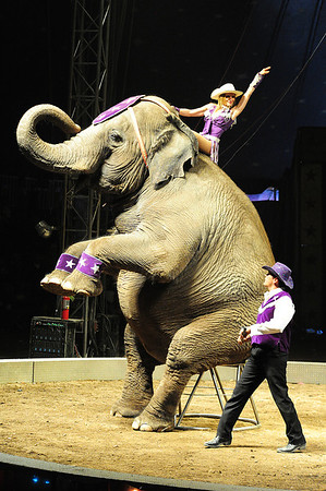 Walt Hester | Trail Gazette<br /> The elephants wow the crowd at the Carson and Barnes Circus on Sunday. The gental giants are possibly the single most iconic acts, next to the clowns, in all of circus.