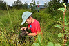 Walt Hester | Trail-Gazette<br /> John Reed, 9, of Fort Collins, checks his net for macro invertabrates in Upper Beaver Meadows on Friday. Fourth-grade students from Fort Collins and Denver for the National Geographic BioBlitz.