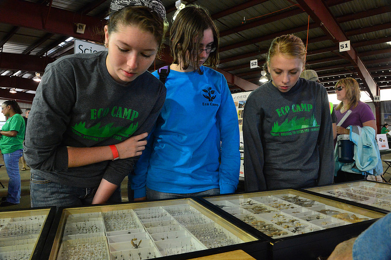 Walt Hester | Trail-Gazette<br /> Daryan Godfrey, 17, Kaitlyn Aronson, 14, and Kendra Clyde, 16, all of Tucson, Ariz. investigate cases full of insects at the BioBlitz on Saturday. The Tucson teens helped invintory creatures in the national park.