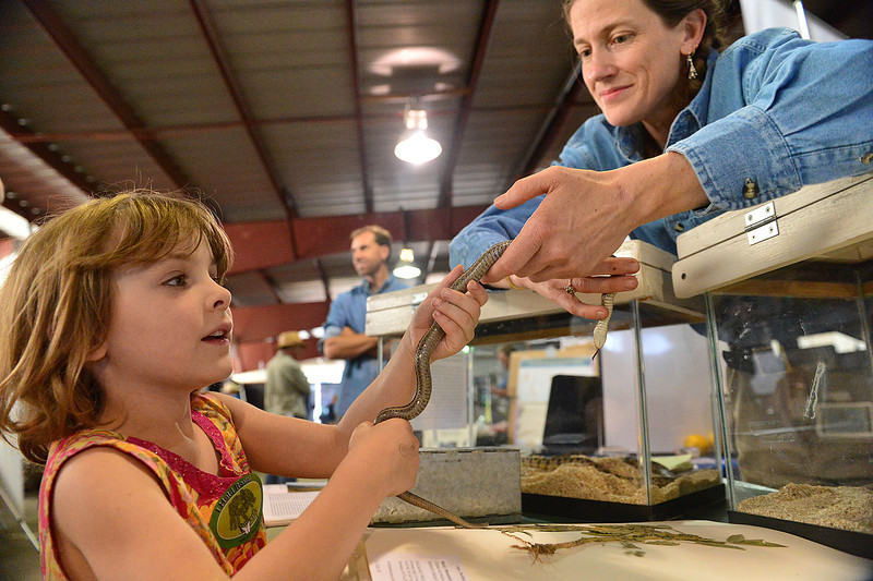 Walt Hester | Trail-Gazette<br /> Kathryn Lyon, 5, holds a Garter snake with UNC researcher Lowry Brown at the BioBlitz festival at the Stanley Fairgrounds on Saturday. The event enouraged children to get excited about science and the environment.