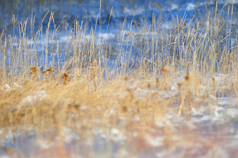 Walt Hester | Trail-Gazette<br /> Tall buff-colored grass sticks up through snow and against long morning shadows near Carriage Drive on Wednesday .