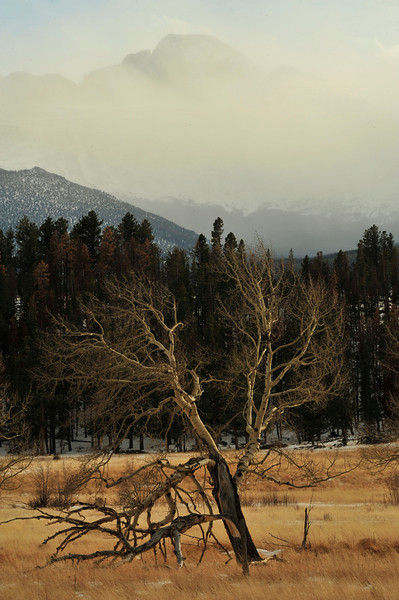Walt Hester | Trail-Gazette<br /> A denuded tree stands in Upper Beaver Meadows below a snow-obscured Longs Peak on Wednesday. While winds were brisk and temperatures were chilly early in the week, Friday is expected to be warmer.