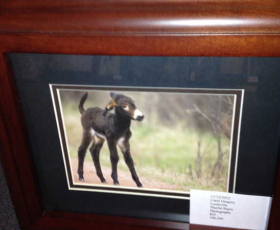 "art5.jpg Carol Gregory captured this new-born burro in a digital image on display in ""Nature's Artistry"" at the Art Center through December."