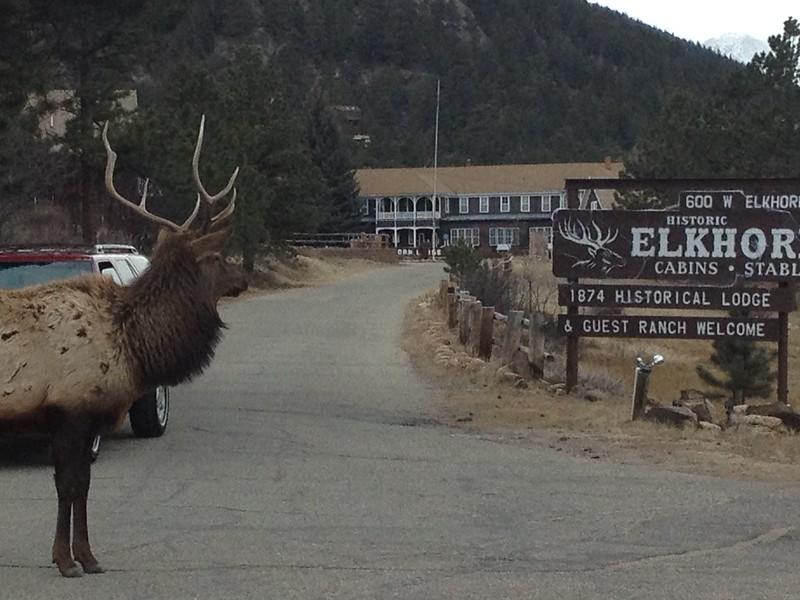 28ep elk at elkhorn.JPG