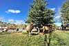 Walt Hester | Trail-Gazette<br /> A small group of elk occupy a traffic island on Elkhorn Avenue on Tuesday.