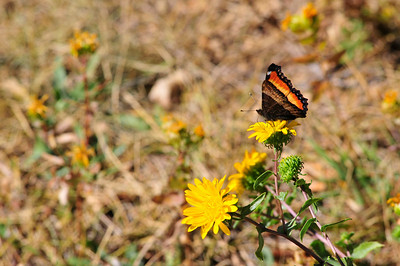 Photo by Walt Hester A butterfly checks a late-season bloom at the YMCA of the Rockies on Saturday.