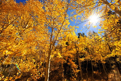 Photo by Walt Hester Sunshine streams through golden aspen leaves near the Twin Sisters trailhead on Wednesday. The annual change is approaching it's peak, rolling down the mountainsides into Estes Park.