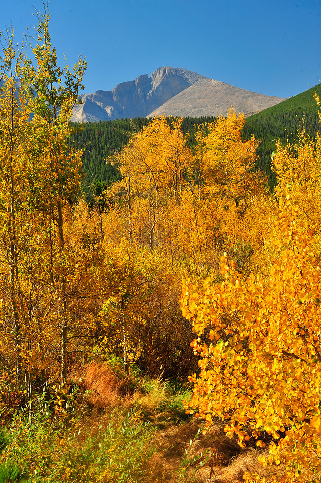Photo by Walt Hester<br /> Longs peak towers over aspens near Lily Lake on Wednesday.