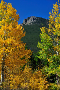 Photo by Walt Hester The Estes Cone peeks out from a grove of aspens near the Twin Sisters trailhead on Wednesday.