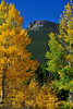 Photo by Walt Hester<br /> The Estes Cone peeks out from a grove of aspens near the Twin Sisters trailhead on Wednesday.