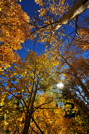 Photo by Walt Hester<br /> Sunshine bursts through fall foliage near the old Lily Lake Visitors Center on Highway 7 on Wednesday.