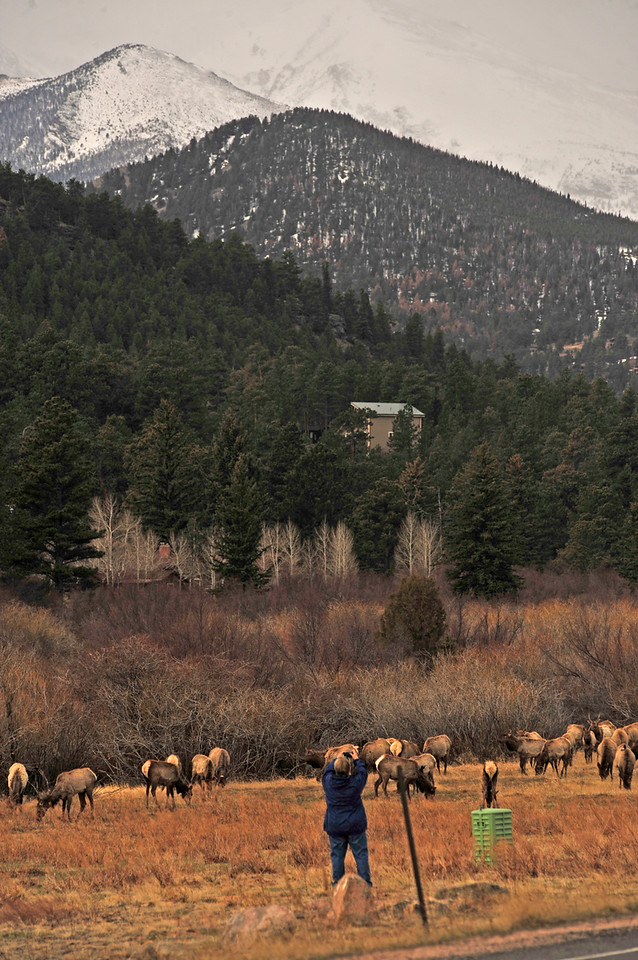 Walt Hester | Trail Gazette<br /> Kathy LeVine of Estes Park snaps a shot of elk and mountains in the Beaver Point tract along Moraine Avenue on Wednesday. LeVine was working on a digital media project.