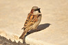 Walt Hester | Trail Gazette<br /> A tiny bird bathes in chilly morning light in Lower Stanley Village on Wednesday. Many of the migrating birds are reappearing in the Estes Park area.