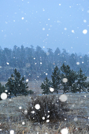 Walt Hester   Trail Gazette<br /> Snow, again, falls on Estes Park on Wednesday night. The shower quickly covered grassy areas with a new coat of snow.