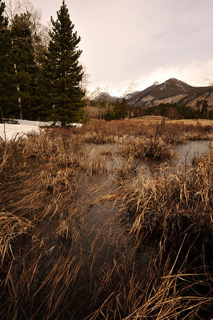 Walt Hester | Trail Gazette<br /> A frozen puddle traps tall grasses in Horseshoe Park on Wednesday. The spring melt is slowly getting underway in the national park, forming seasonal streams and ponds.