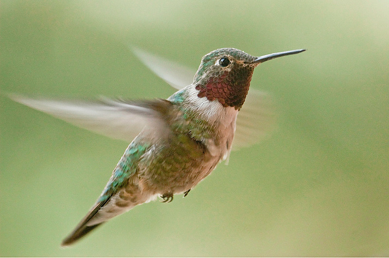 A hummingbird hovers near a home in the Fall River area of Estes Park.