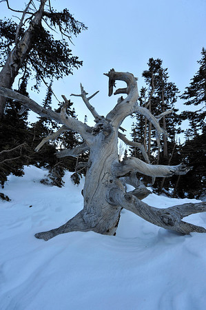Walt Hester | Trail-Gazette<br /> A wind-stripped old snag stands on the shore of Emerald Lake. The wind effects everything in the high elevations, creating drifts, shaping trees and exposing rock and ice.