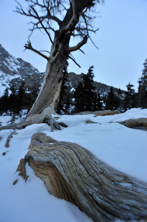 Walt Hester | Trail-Gazette<br /> Cracks create lines in an exposed tree root on the shore of Emerald Lake.