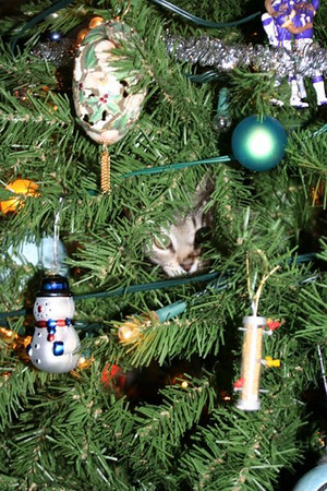 A cat is hidden behind the decorations on a Christmas tree.