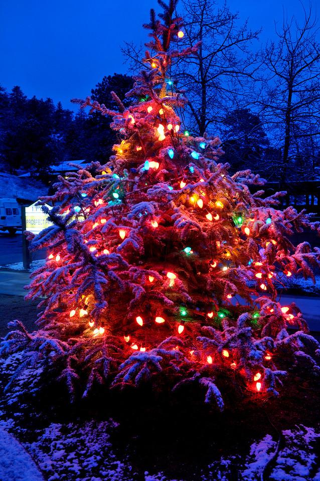 Walt Hester | Trail-Gazett<br /> The Prospect Park Living Center's tree glows at twilight on Monday.