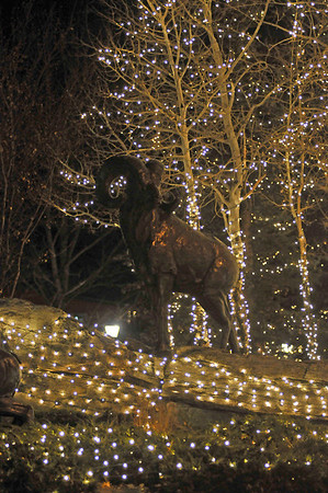 Walt Hester   Trail-Gazett<br /> Christmas lights and the ram statue decorate Elkhorn Avenue on Monday.