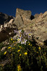 Walt Hester | Trail-Gazette<br /> Columbines decorate the Chasm Meadow below the Ships Prow in July.
